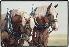 horses in harness | Home - AMISH HORSE HARNESSES