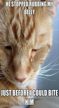 """Hopefully you love cats and here's huge collection of some """"Best 26 Sad Cat Memes"""". These """"Best 26 Sad Cat Memes"""" are so funny and able to make you laugh. Funny Animal Pictures, Cute Funny Animals, Funny Cute, Cute Cats, Animal Pics, Funny Pics, Hilarious Photos, Sad Cat, Doja Cat"""