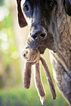 Top 10 Dog Breeds That Barks The Least