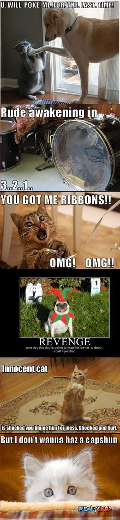Very Funny Animals Quotes | ... Funny Animal Pictures Quotes » Animals Conversation Very Funny Animal