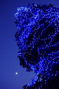 Christmas tree, Barcelona, Spain