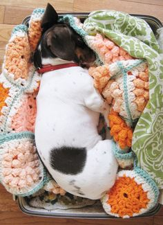I think my dogs need more crochet! (dottie angel via sfgirlbybay)