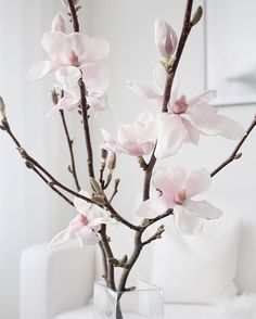 Oh #magnolia  Loved my #magnoliabranch but it's now going away... Lovely sunny thursday to you all!
