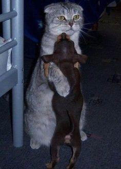 おー、よしよし… #cat #neko #猫 on Twitpic