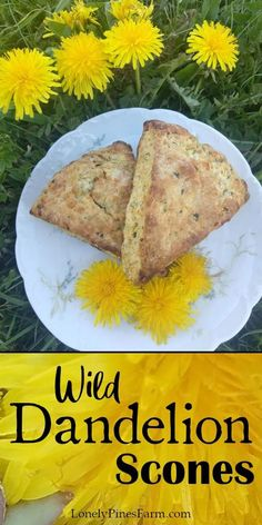 These delicate dandelion scones make an excellent addition to your next brunch! Perfect for first-time foragers and seasoned pros. Healthy Dinner Recipes, Vegan Recipes, Brunch, Cream Scones, Dandelion Recipes, Breakfast Pastries, Flower Food, Greens Recipe, Baking Recipes
