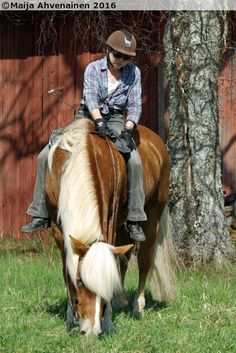 Finnhorse stallion Finkker Palomino, Racing, Horses, Animals, Running, Animales, Animaux, Auto Racing, Animal