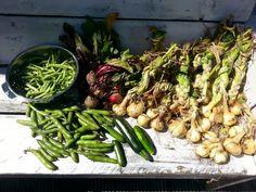 De oogst van vandaag-na alle regen. Slecht jaar voor de moestuin.  Helaas