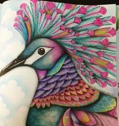 Inspirational Coloring Pages by @fanow #inspiração #coloringbooks #livrosdecolorir #jardimsecreto #secretgarden #florestaencantada #enchantedforest #reinoanimal #animalkingdom #adultcoloring #johannabasford #milliemarotta #tropicalwonderland