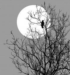 illustration corbeaux assis sur des arbres contre le soleil Banque dimages - 7830648