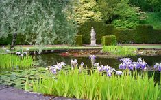 Water in English Gardens (32 of 33) |  Pond with Water liliies and Irises, Knightshayes Court Gardens, Devon, England. | da ukgardenphotos