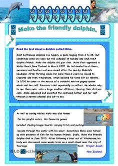 Reading Moko The Dolphin