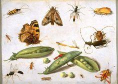 Jan Van Kessel~ #plants #insects