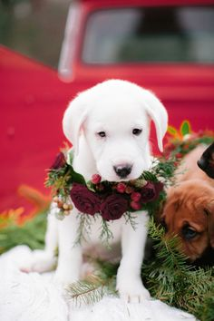 This Puppy-Filled Holiday Shoot Will Be the Cutest Thing You'll See All Day Animals And Pets, Baby Animals, Funny Animals, Cute Animals, Cute Puppies, Cute Dogs, Dogs And Puppies, Doggies, Cute Animal Photos