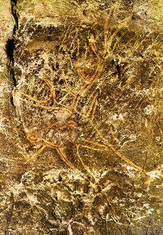 LASCAUX - splendide tête de cervidé de l'abside