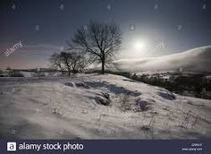 Image result for moon shining through woodland trees in the snow