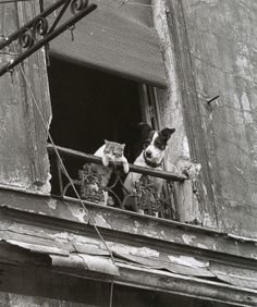 """'Untitled' by Annick Gérardin 