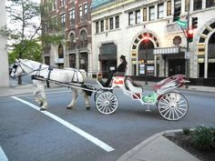 Asheville Horse & Carriage Tours - a service based at Pritchard Park in downtown since 2013. Catherine Hunter and her horse-drawn carriage rides are a popular, easy-paced way to see downtown Asheville. Hunter said a carriage ride is a different way to see downtown and support local businesses. Her horse is a 15-year-old Percheron named Silver.