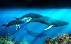 Humpback Whales by Daniel Eskridge on Fine Art America ~ prints starting @ $30
