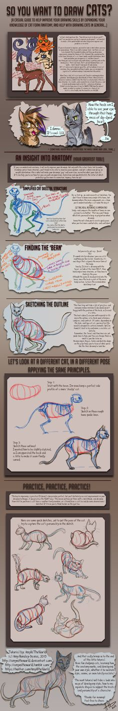 So you want to draw Cats? TUTORIAL by AmyVsTheWorld.deviantart.com on @deviantART