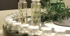 Focus.de - Neue Hoffnung durch Epidiolex - Warum manche Eltern ihren Kindern Cannabis geben