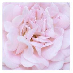 Have a blooming weekend everyone 🌸😊 xxx #KORAOrganicsLifestyle