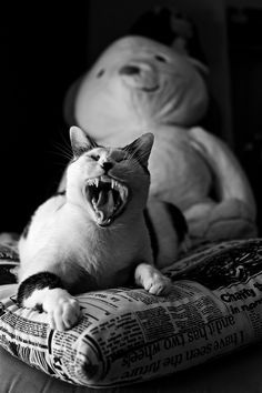 """Sleepy - <a title=""""https://www.facebook.com/RicardoAlvesPhotography"""" href=""""https://www.facebook.com/RicardoAlvesPhotography"""">https://www.facebook.com/RicardoAlvesPhotography</a>"""