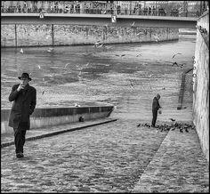 Mouettes & Pigeons * Paris
