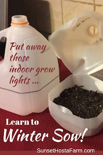 Use your milk jugs and sow your seeds . in the winter! There are very few things in life that are SO easy yet work SO well. Winter Sowing is one of them. Throw away those indoor grow lights. Sow seeds the easy way and fill your garden wit Unique Garden, Diy Garden, Garden Plants, Garden Seeds, Garden Projects, Shade Garden, Spiral Garden, Garden Types, Flowering Plants