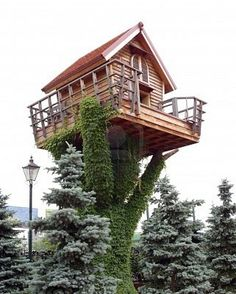 WHAT tree is that tree house sitting on? Is it just support poles with vines growing on it?