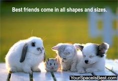 best-friends-animals.jpg Photo:  This Photo was uploaded by mom4jazz. Find other best-friends-animals.jpg pictures and photos or upload your own with Pho...