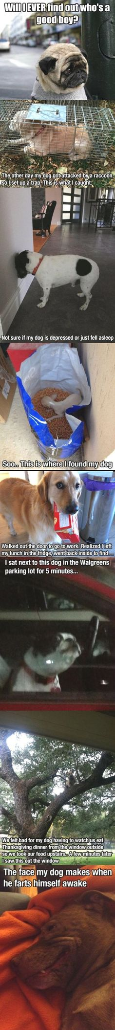 If your dog does the head-press thing, it could mean brain cancer. But otherwise these are funny :)