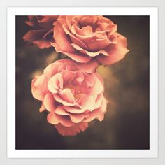 Roses (Vintage Flower Photography) Art Print by AC Photography - $22.88
