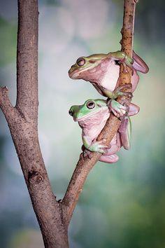 Bokeh photography Love Duet Frog by lessy sebastian