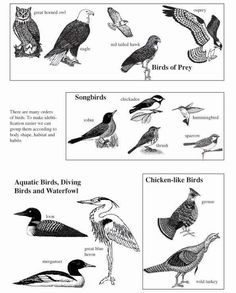 types of bird beaks and feet and what they are used for