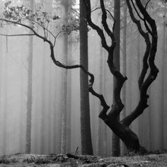 Picturing a dramatic black & white image in a winter forest...