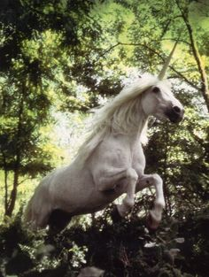 It's. A unicorn. Jumping over a hedge. Either I'm dead or this is just too awesome, people!!! :D