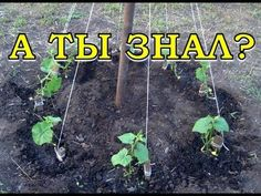 Growing Fruit Trees, Herbs For Health, Potted Trees, Vegetable Garden Design, Small Farm, Grow Your Own Food, Front Yard Landscaping, Growing Vegetables, Dream Garden