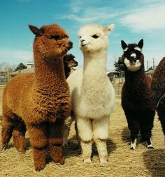 I WILL DEFINATELY HAVE THESE WHEN I BUY MY LAND!! LOVE THESE GUYS!