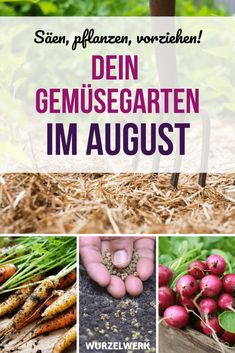 Aussaat & Pflanzen im August + Beispiel-Pflanzplan - Wurzelwerk The Effective Pictures We Offer You About Garden Care schedule A quality picture can tell you many things. Back Gardens, Outdoor Gardens, Garden Pots, Vegetable Garden, Geranium Macrorrhizum, Le Baobab, Weed Seeds, Root System, Vegetable Gardening