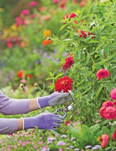 7) Dream Garden #organic #gardening