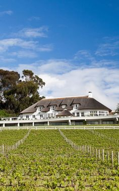 23 best cape winelands images news south africa south africa rh pinterest com