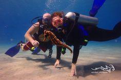 Great dive moment again at Curacao ...  #scuba #relaxedguideddives #seahorse #diving #duiken #tauchen #duikeninbeeld #fun