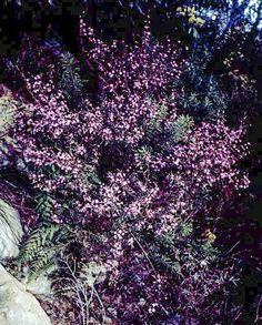 Media Images, Bellisima, Google Images, Home And Garden, Plants, Flowers