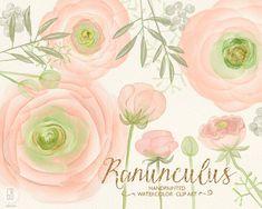 Watercolor ranunculus blush pink buttercups hand от GrafikBoutique