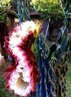 # CACTUS FLOWER                                                                                                                                                      More