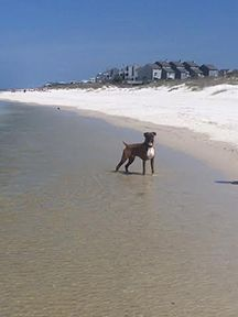 Water's Edge Barrier Dunes 177 - best ever - nicely decorated, clean, well-stocked, amazing gulf front views from porches. Cape San Blas Florida, Dog Friends, Dune, Cute Puppies, The Unit, Island, Vacation, Pets, Beach