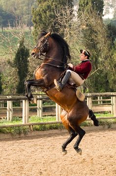 Portuguese School of Equestrian Art at Palacio de Queluz PALACIO DE QUELUZ-LISBON-PORTUGAL Expolre Portugal in Enjoy Portugal Website and Facebook Page www.enjoyportugal.eu https://www.facebook.com/enjoyportugalcountry