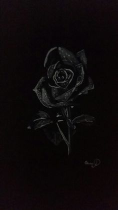 Draw black Rose by artist Oana