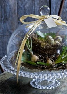 domed cake plate with woodland rustic theme for + Spring + Easter Pot Pourri, Seasonal Decor, Holiday Decor, Deco Nature, The Bell Jar, Bell Jars, Deco Floral, Spring Has Sprung, Apothecary Jars