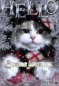 Chez Anna – Page 54 – animal wallpaper I Love Cats, Crazy Cats, Cute Cats, Funny Cats, Christmas Animals, Christmas Cats, Merry Christmas, Beautiful Cats, Animals Beautiful